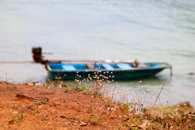 Blomma gräs och det lilla lokala fartyget på stranden arkivbilder