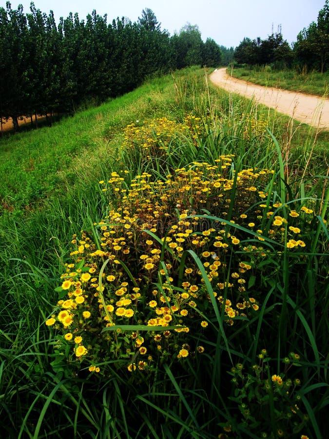 blomma gul vildblomma arkivfoton