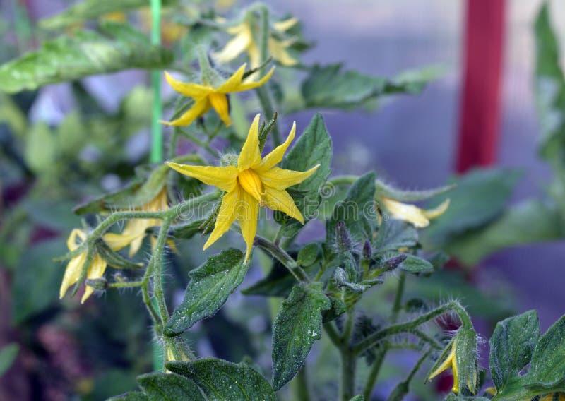 Blomma, gulna, naturen, växten, blommor, våren, gräsplan, trädgården, blomningen, vit, flora, bladet, sommar, makroen som blommar royaltyfri foto