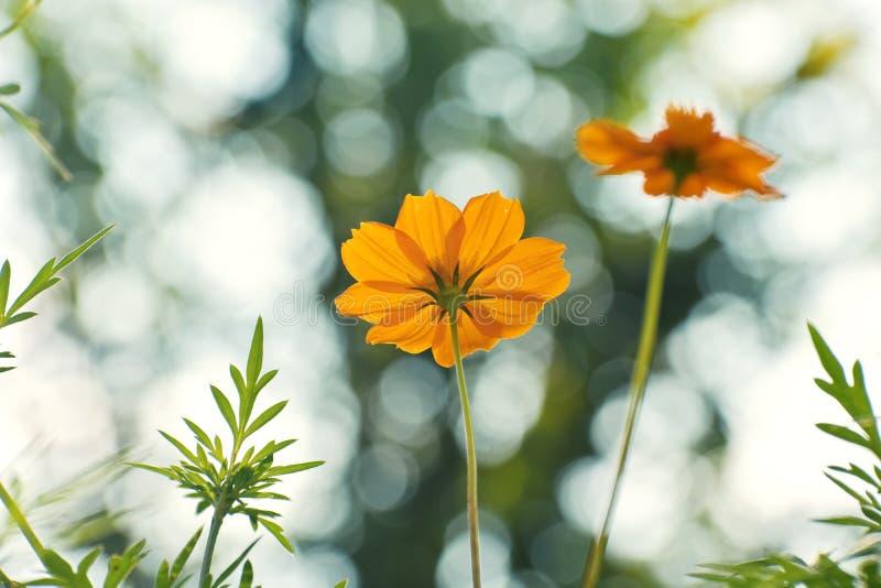 Blomma i bokehfotografi royaltyfria bilder