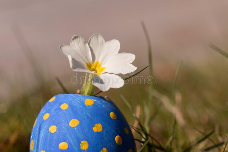 Blomma i det blåa easter ägget royaltyfri foto