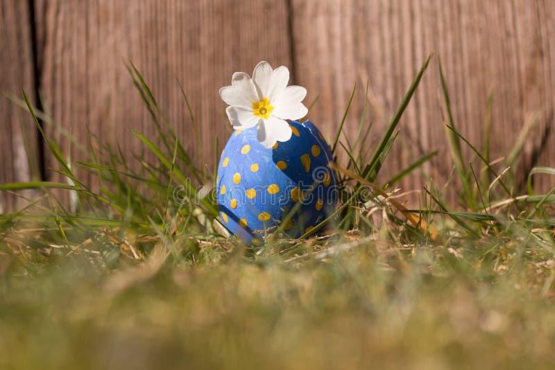 Blomma i det blåa easter ägget royaltyfri fotografi