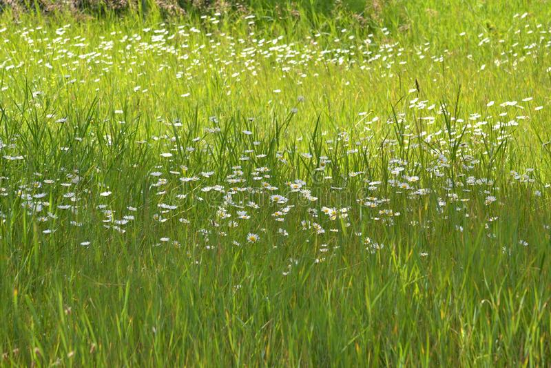 Blomma i det löst med gräs royaltyfria bilder