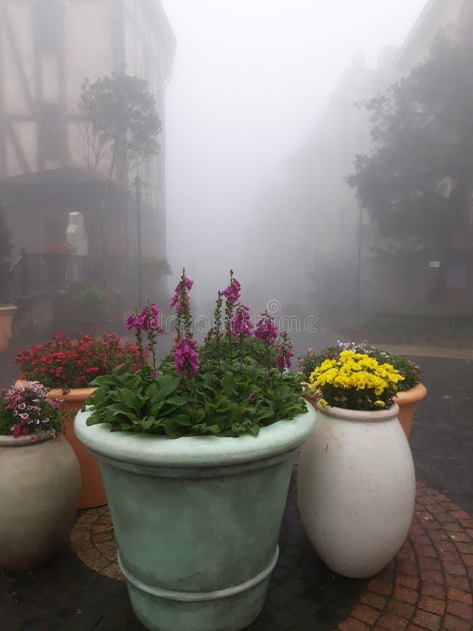Blomma i dimma royaltyfria foton