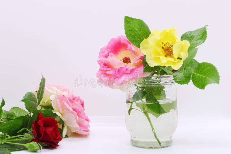 Blomma i en exponeringsglasvas, rosnärbild på en vit bakgrund i en vas, vykort för en ferie, härliga blommor, arkivfoton