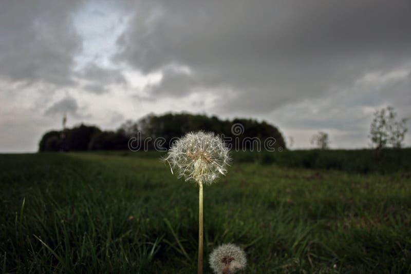 Blomma i en storm arkivbild