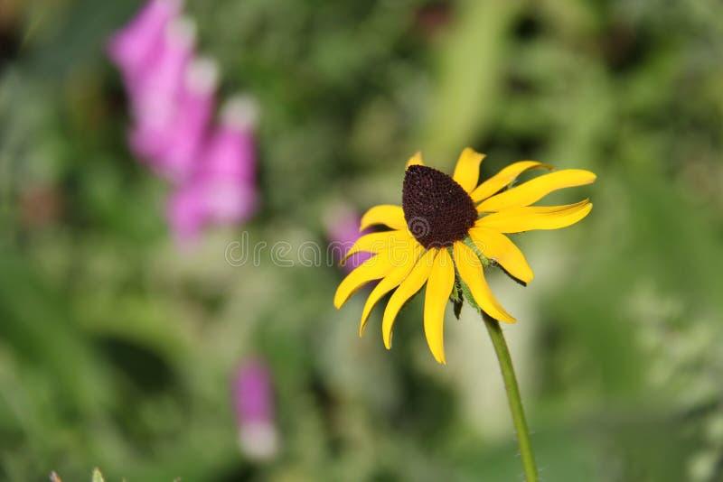 Blomma i en trädgård fotografering för bildbyråer