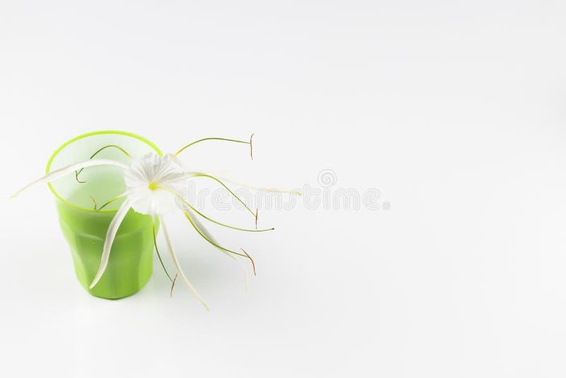 Blomma i ett exponeringsglas arkivfoto
