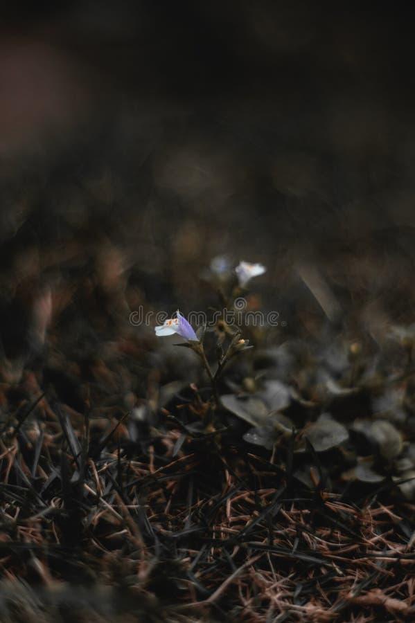 Blomma i gräs arkivfoto