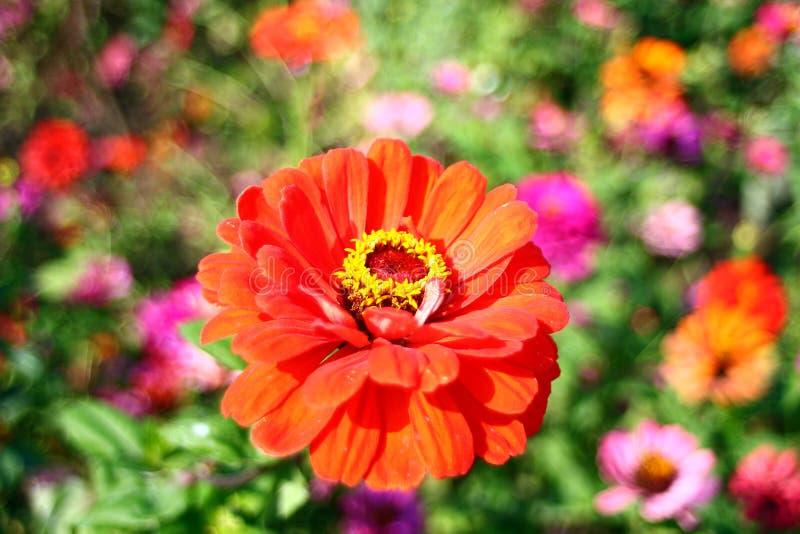 Blomma i parkera arkivfoton
