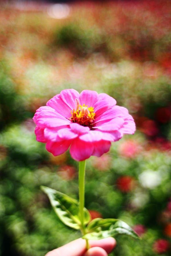 Blomma i parkera arkivbild