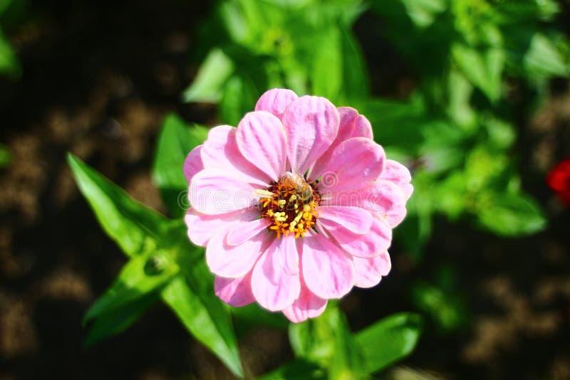 Blomma i parkera arkivfoto