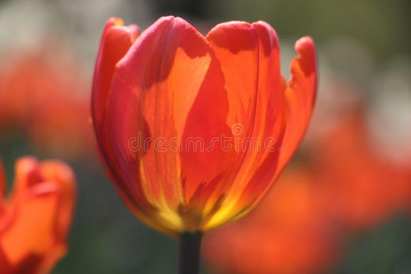 Blomma i rad arkivfoto
