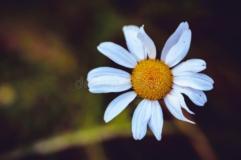 Blomma i sätta in arkivbilder