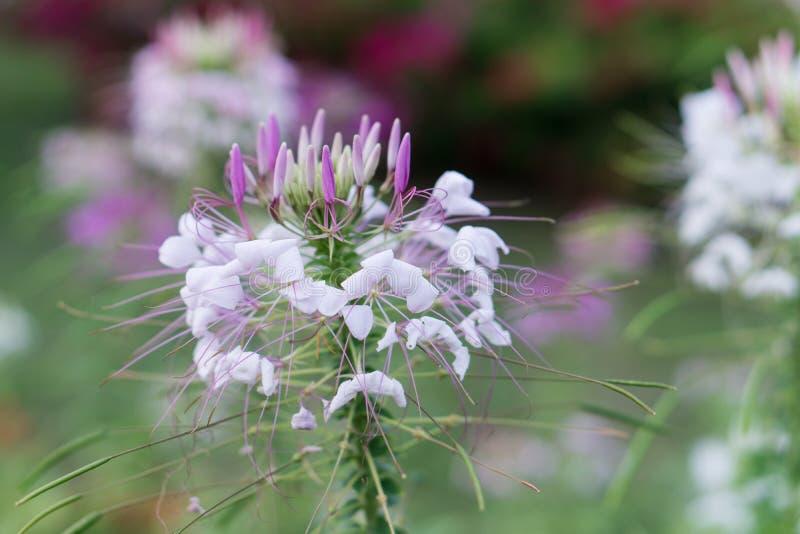 Blomma i skog royaltyfria bilder