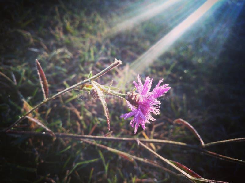 Blomma i is royaltyfri fotografi