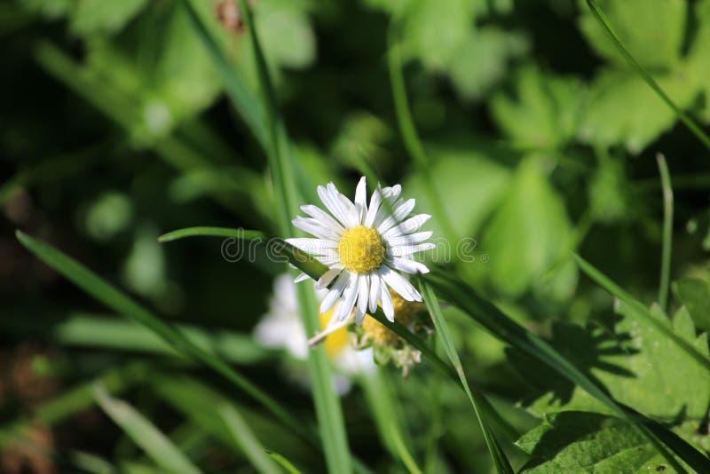 Blomma i sunen royaltyfri fotografi