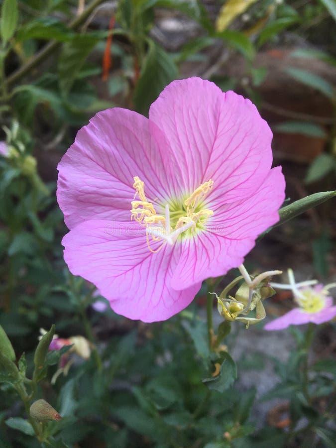 Blomma i tr?dg?rden arkivbilder