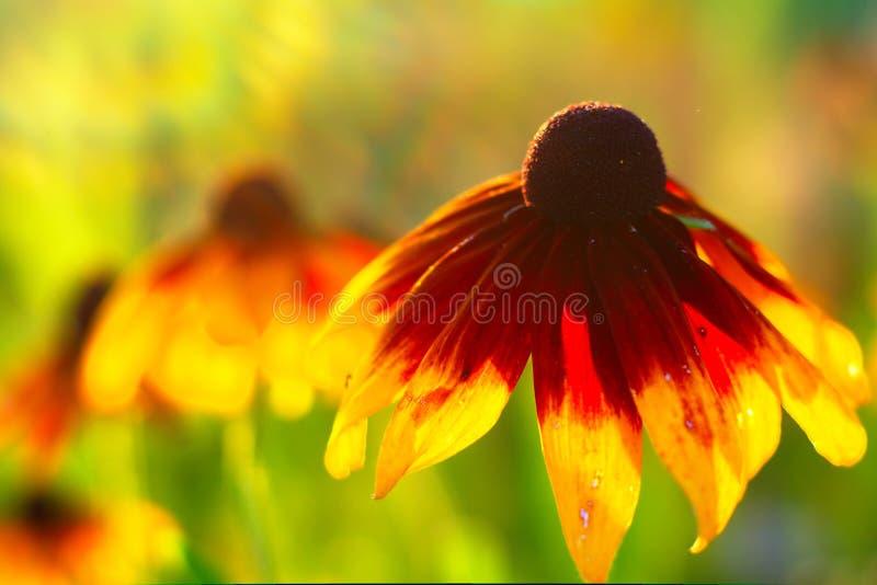 Blomma i varma Sunny Summer royaltyfri fotografi