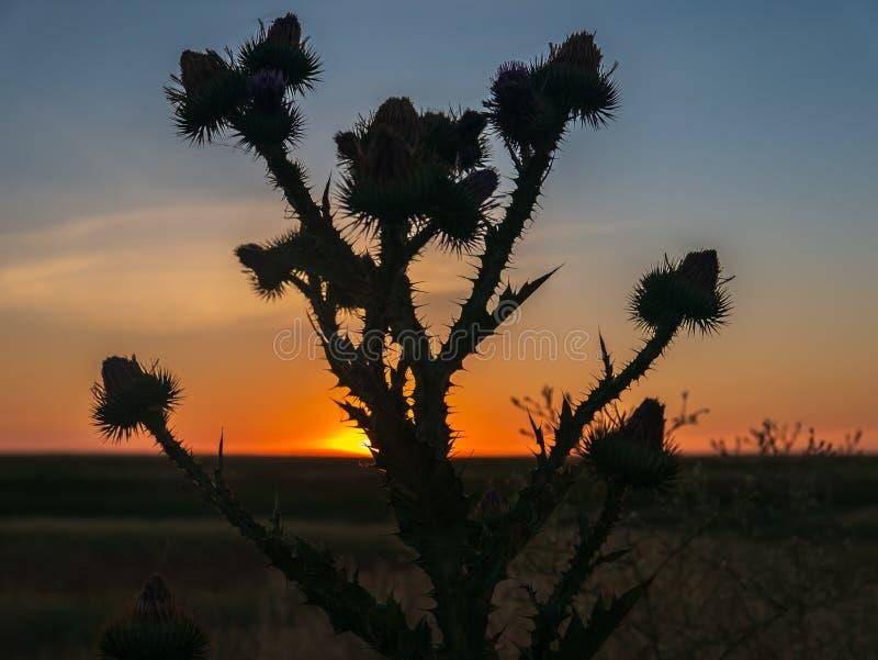 Blomma i vetefältet på solnedgången på en sommardag royaltyfri bild