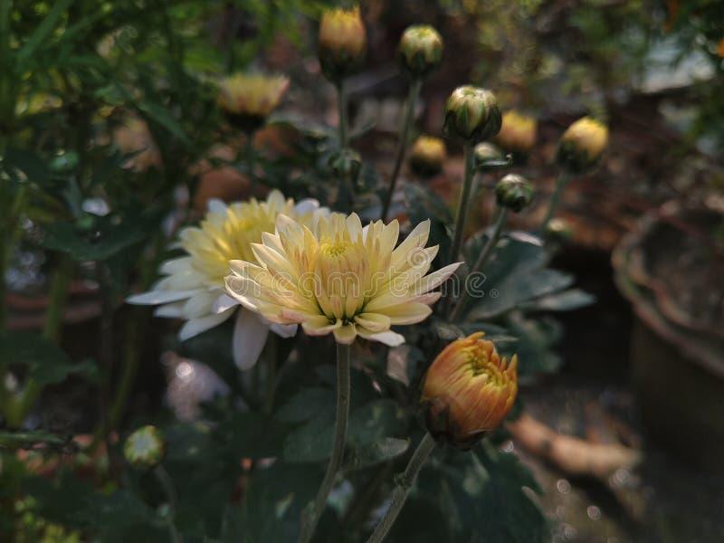 Blomma i vit royaltyfria foton