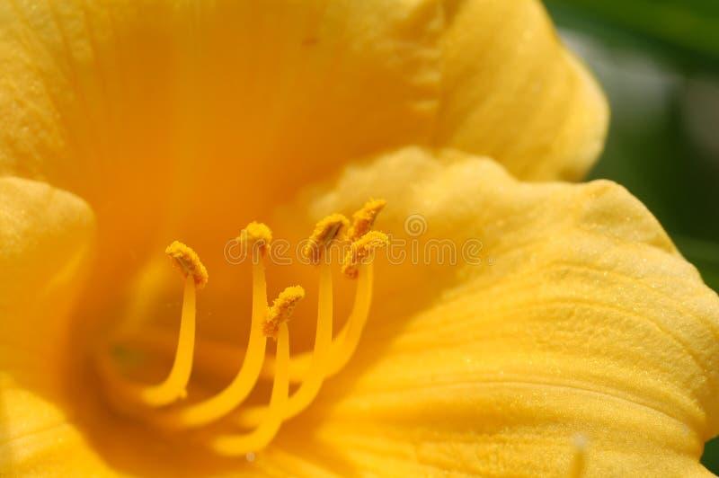 Download Blomma inom fotografering för bildbyråer. Bild av makro - 978867