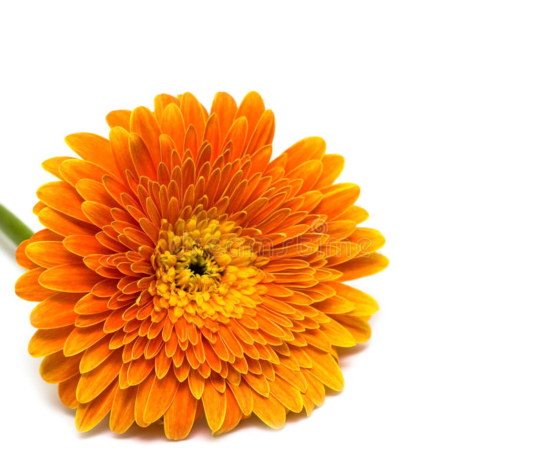 blomma isolerad orange royaltyfri fotografi