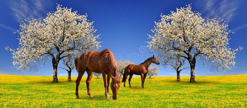 Hästar i äng royaltyfri bild