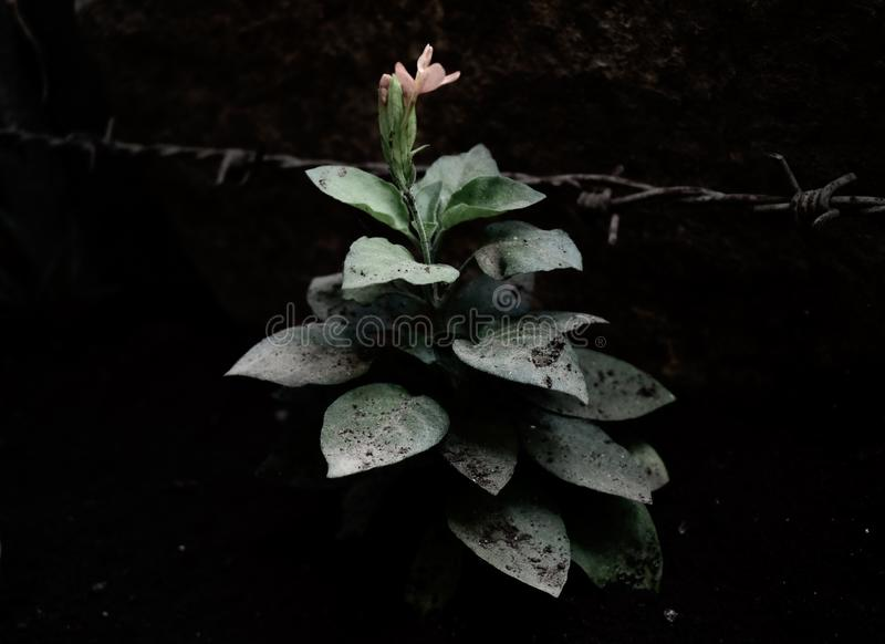 Blomma knoppen i trädgården fotografering för bildbyråer