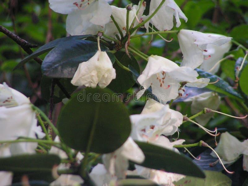 Blomma Landskapomr?de i str?larna av inst?llningssolen royaltyfri foto