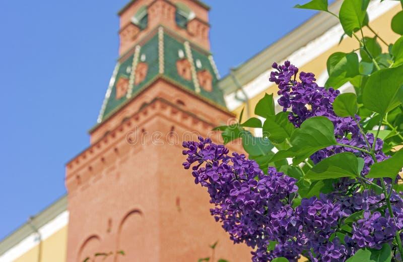 Blomma lilan nära tornet av MoskvaKreml En filial av att blomstra lilor i stadsträdgården arkivfoto