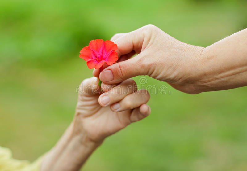 blomma little som är röd arkivbild