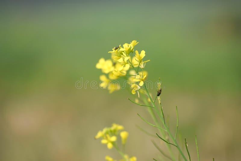 Blomma med ett bi fotografering för bildbyråer