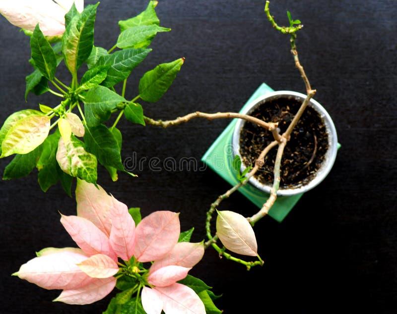 Blomma med gräsplan- och rosa färgsidor royaltyfri fotografi