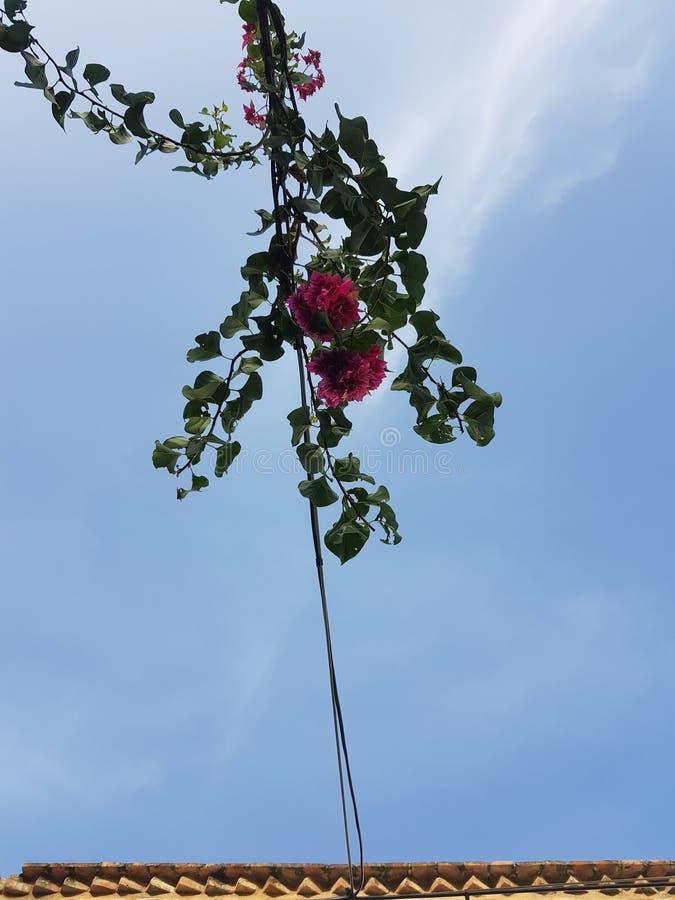 Blomma med himlen arkivbilder