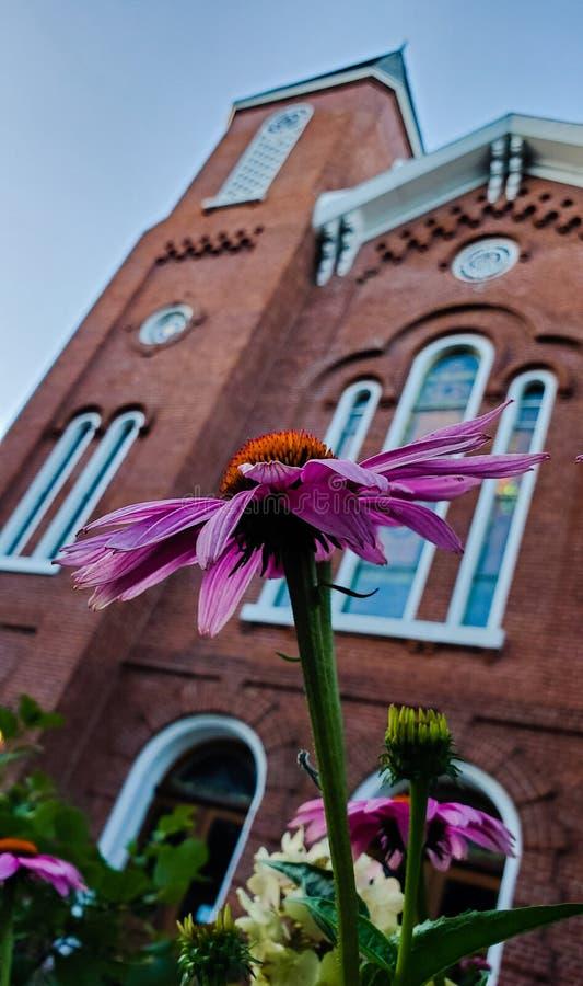 Blomma med kyrkan i bakgrund royaltyfri bild