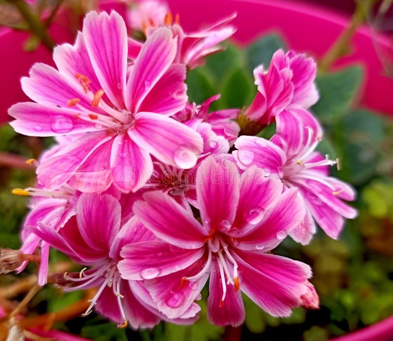 Blomma med regndroppar fotografering för bildbyråer