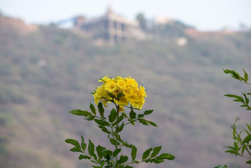 Blomma med suddighetsbakgrund royaltyfri foto