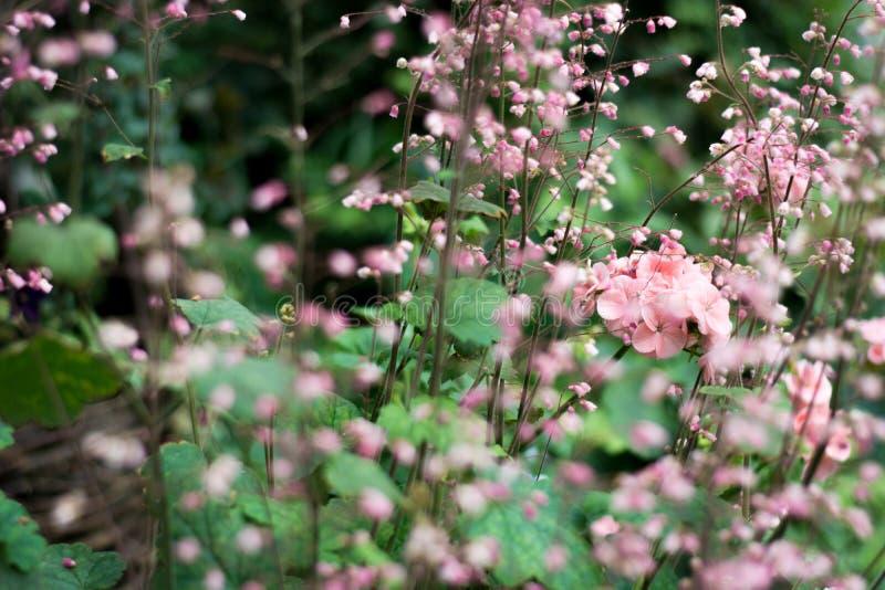 Blomma med suddighetsbakgrund arkivbild
