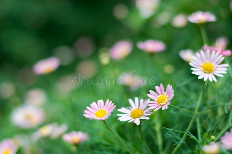 Blomma med suddighetsbakgrund royaltyfri fotografi