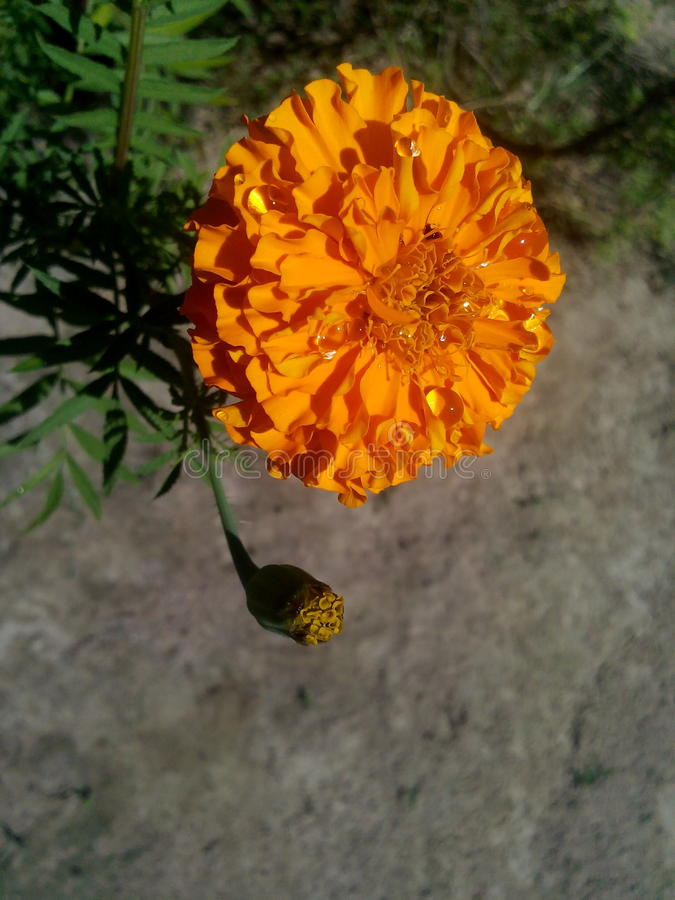 blomma mitt arkivbild