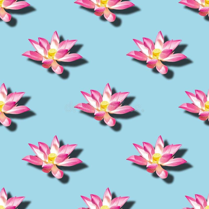 Blomma modellen för nucifera för Nelumbo för blommor för sakral lotusblomma den sömlösa arkivfoto