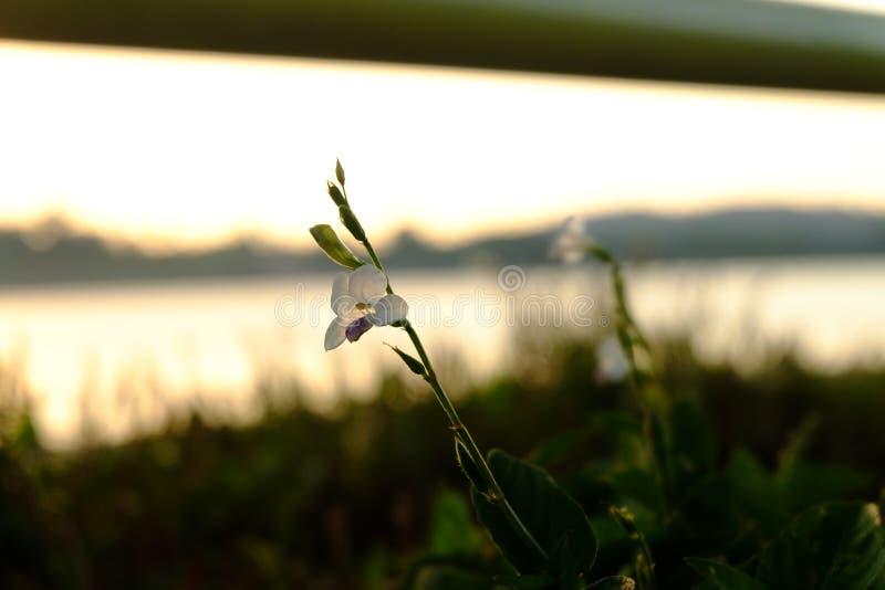 Blomma mot solnedgånghimlen fotografering för bildbyråer