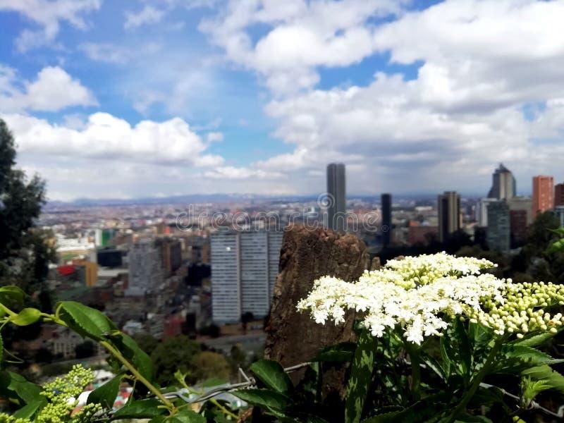 Blomma, natur och ett enormt landskap royaltyfri bild