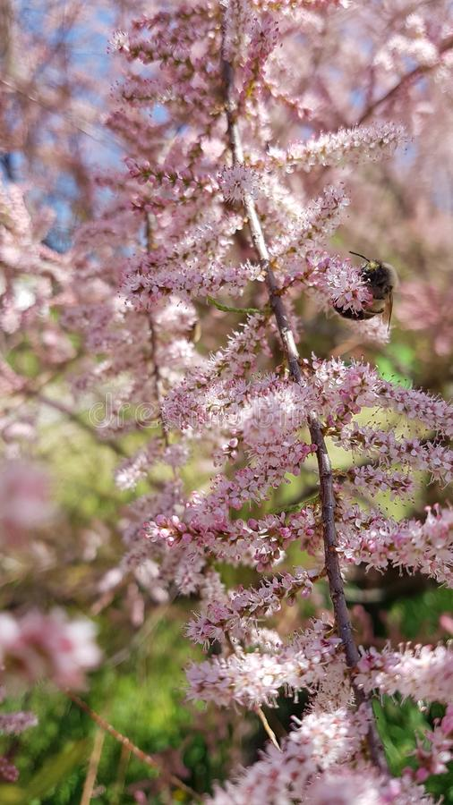 Blomma och ett bi arkivbilder