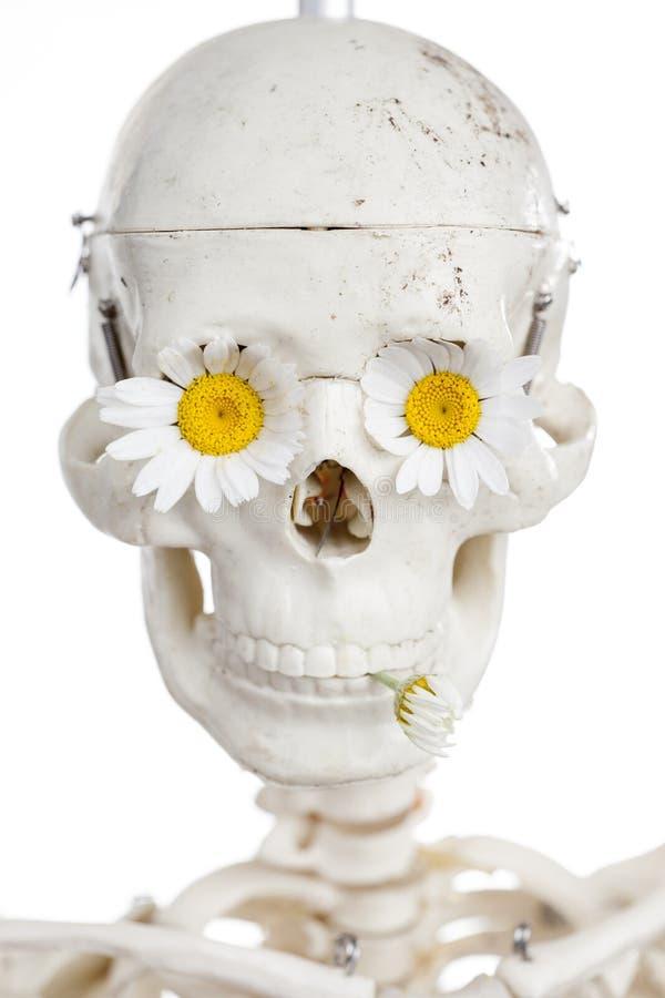 Blomma- och människaskalle royaltyfria foton