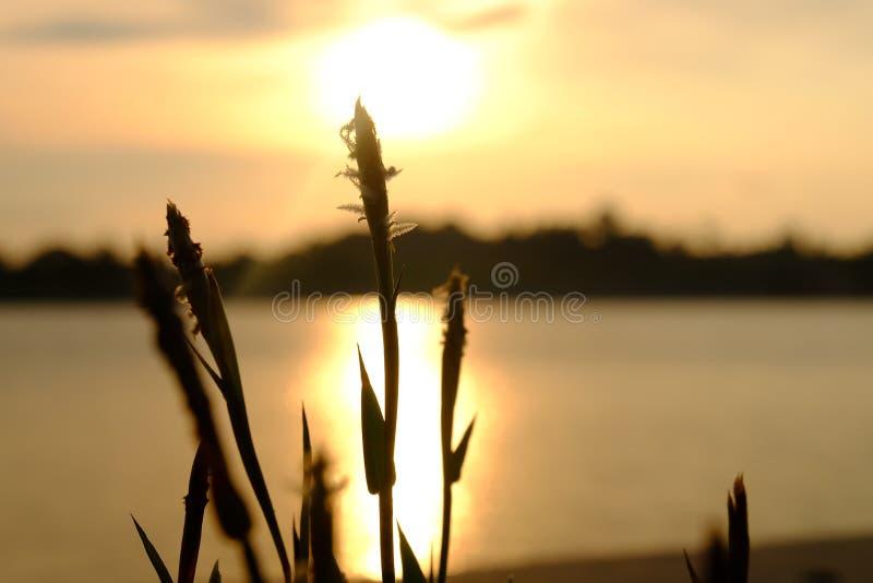 Blomma och solnedgång arkivfoton