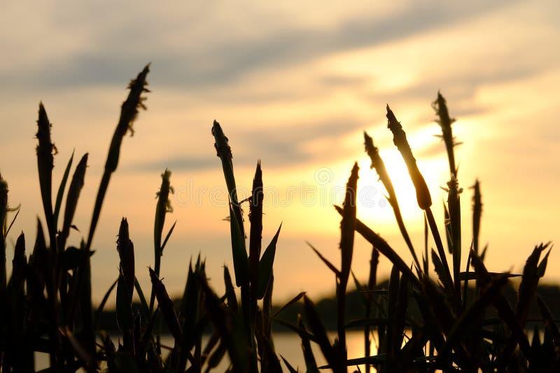 Blomma och solnedgång fotografering för bildbyråer