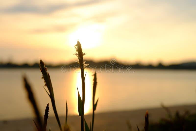 Blomma och solnedgång royaltyfria bilder
