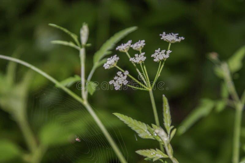 Blomma och spiderweb royaltyfri fotografi